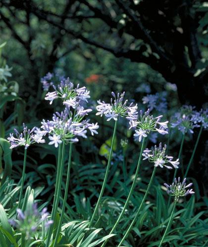 6月に咲く花 一覧 みんなの花図鑑掲載数3406件